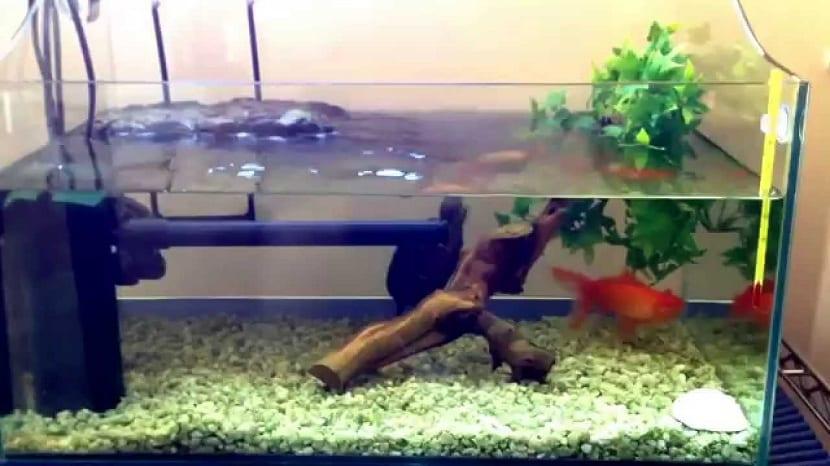 Acuario para la tortuga china