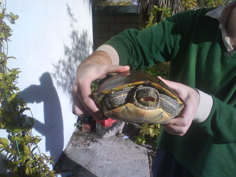 Cuidados de tortuga de florida