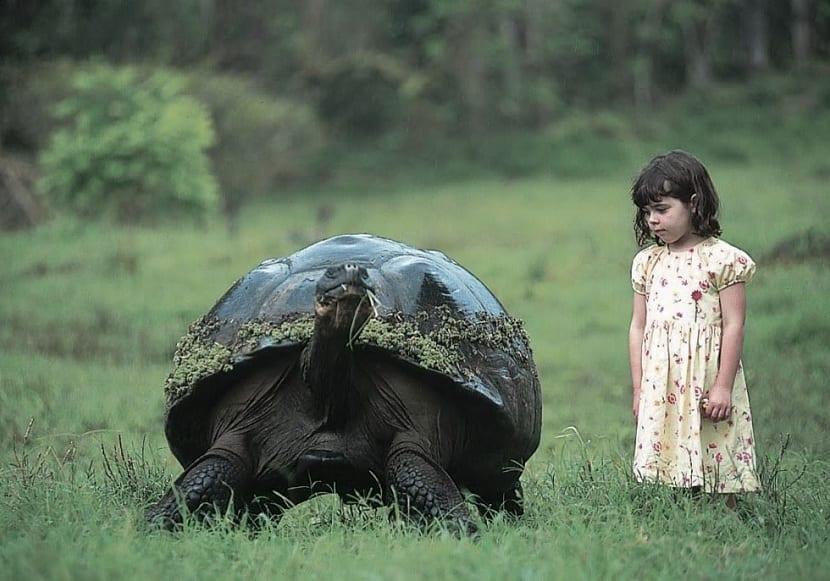 gran tamaño de la tortuga