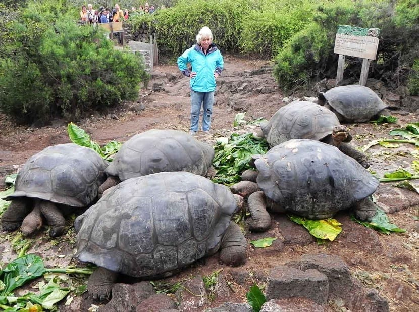 Tamaño de las tortugas galápagos