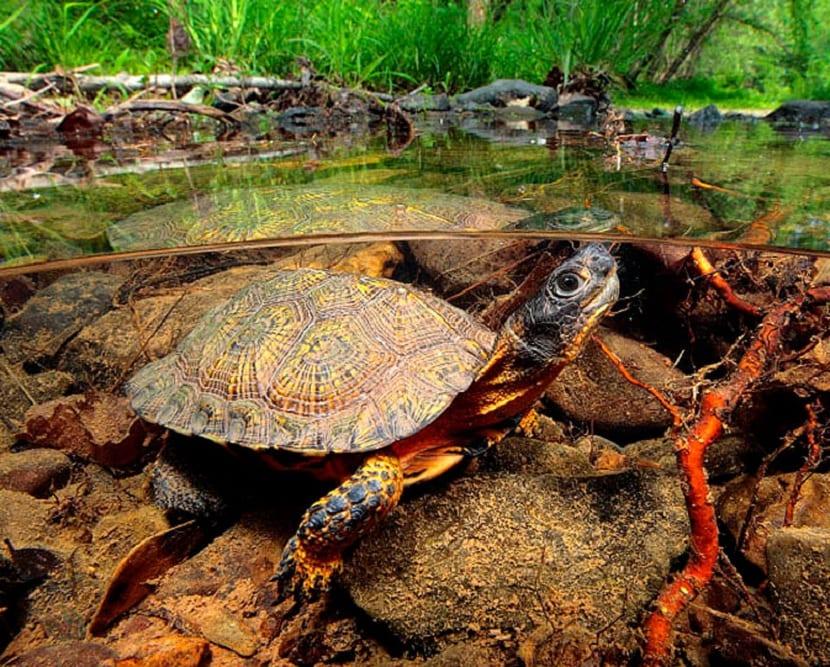 Amenazas de las tortugas
