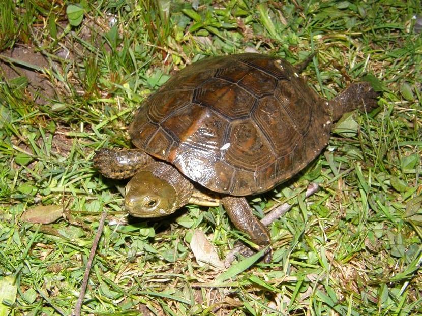 Cuidados de la tortuga leprosa