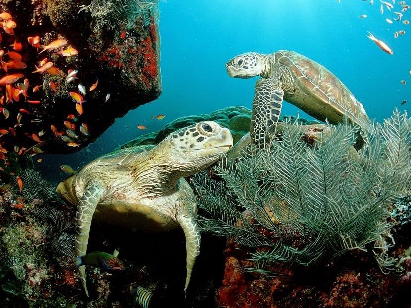 Estructura social de tortuga golfina