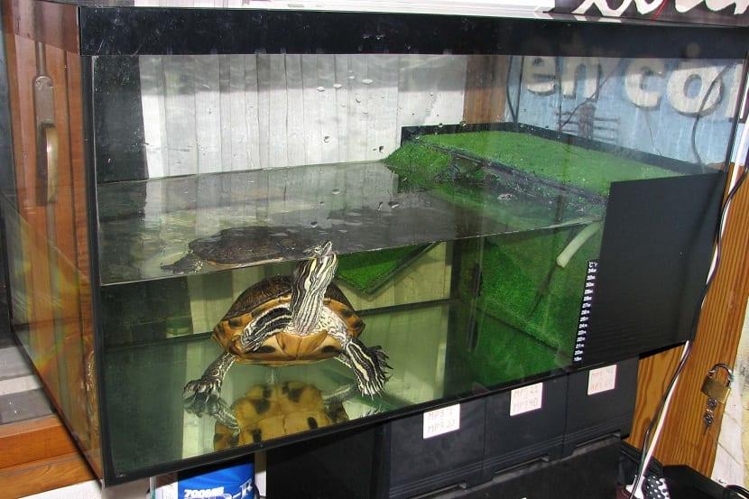 Acuarios para tortugas