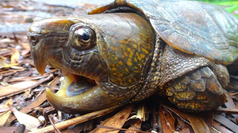 cabeza de la tortuga