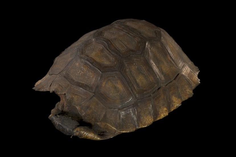 Caparazón de las tortugas