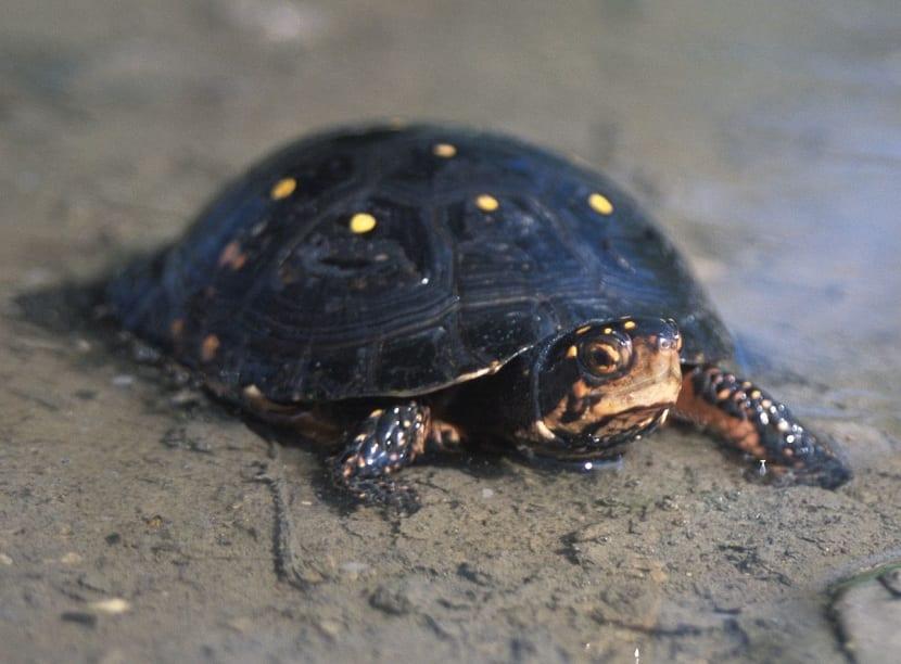 Generalidades de la tortuga