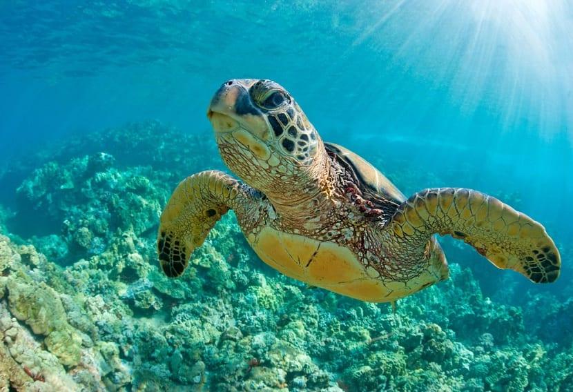 Hábitat de las tortugas marinas