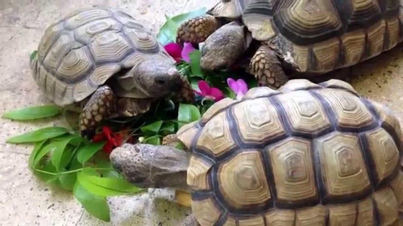 Plantas para las tortugas