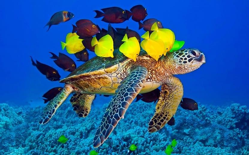 Tortugas marinas y estructura social