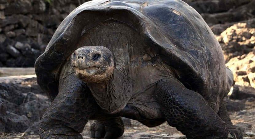 Tortugas extintas