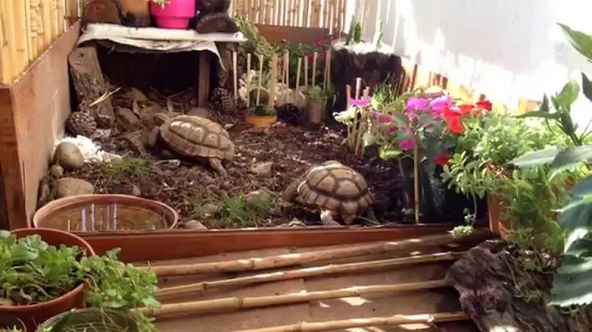 Terrarios para tortugas de tierra