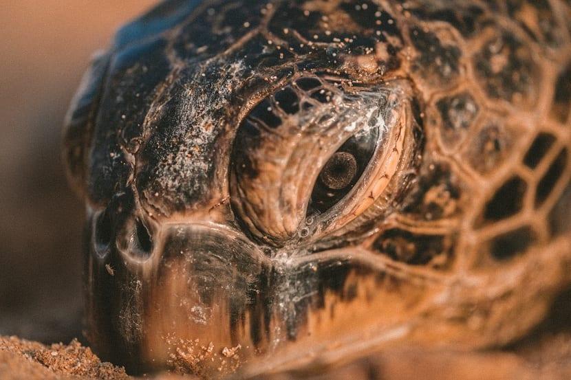 detalle de una tortuga