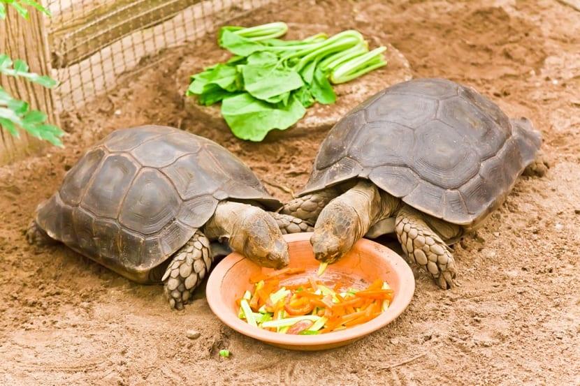 distinta comida para tortuga