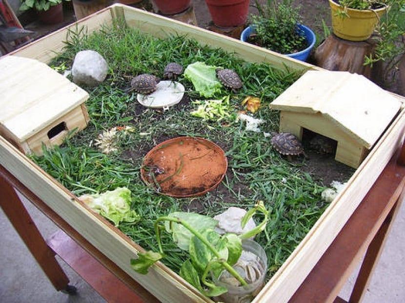 terrario enorme para tortug
