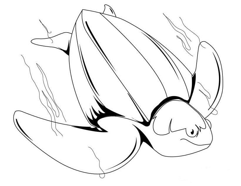 Tortugas Dibujos. dibujos de tortugas para colorear y pintar. dibujo ...
