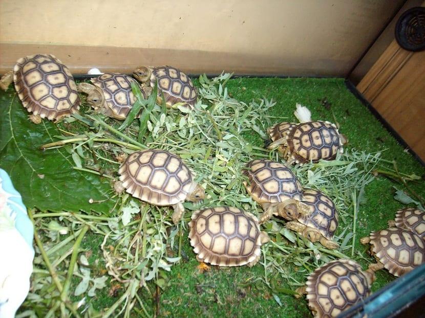 tortugas en el terrario