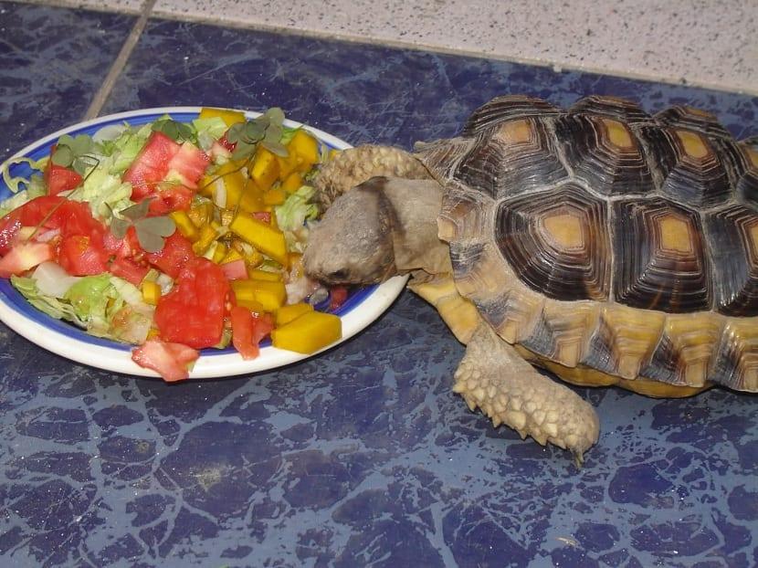 variedad de comida para las tortugas