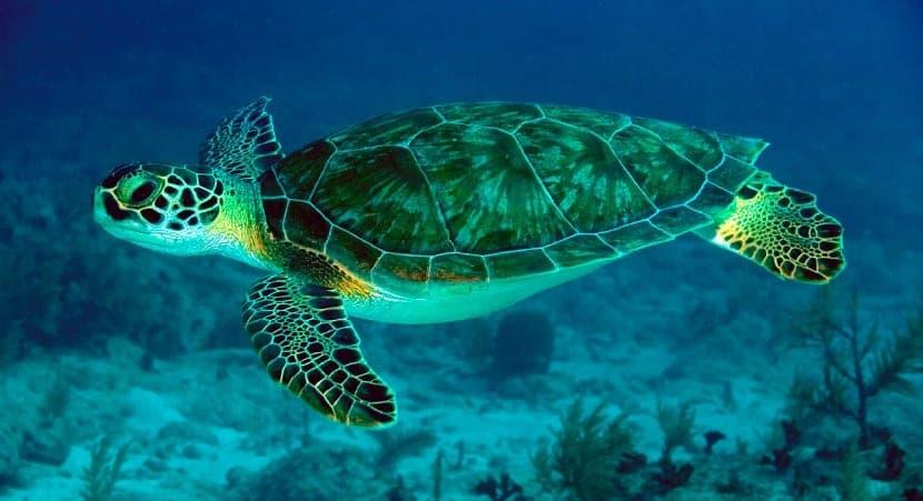 comida de las tortugas marinas