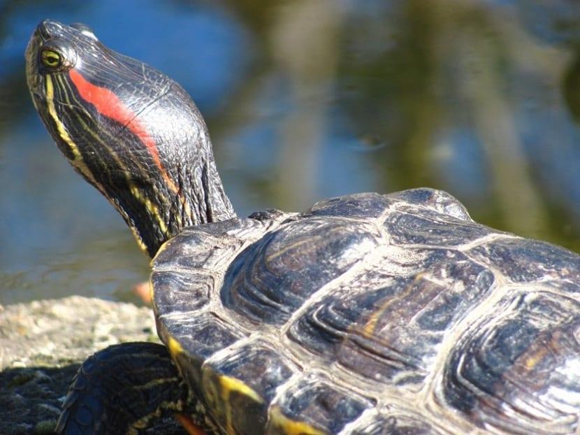 edad de una tortuga