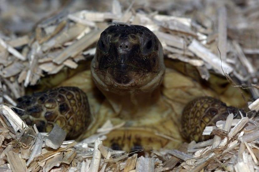 Hibernación y tortugas