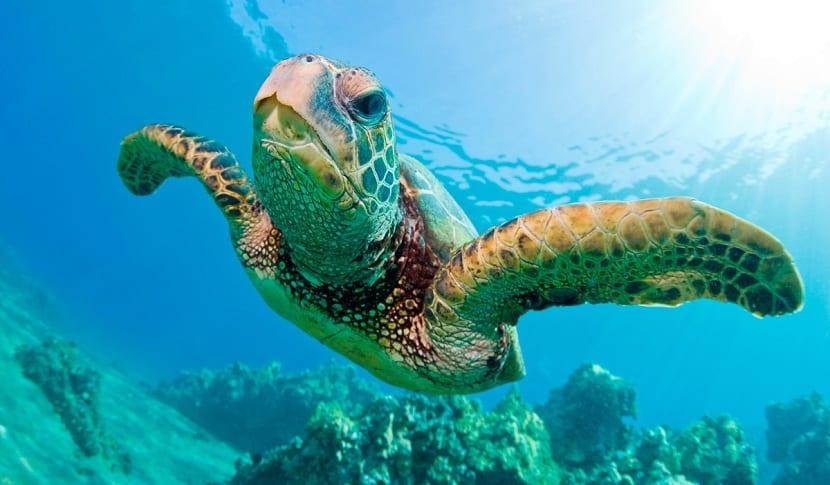 que comen las tortugas marinas