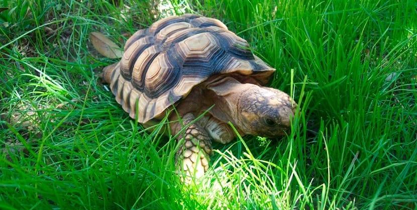 tortuga de tierra en el exterior