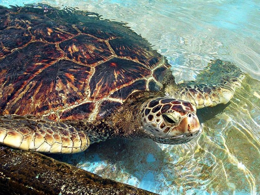 tortuga en el fondo marino