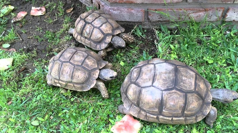 vida de las tortugas terrestres